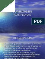 7_Rosifloras