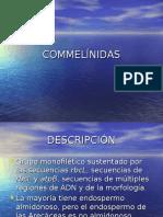 8_Commelinidas