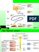 Synapses.ppt