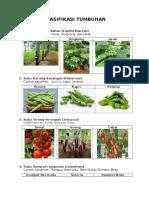 klasiikasi tumbuhan