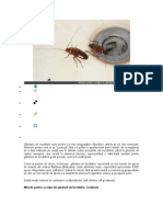 Metode Pentru a Scăpa de Gândacii de Bucătărie