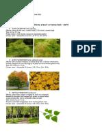 Arbori-ornamentali-