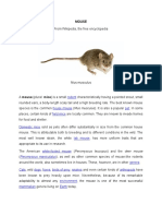 Mouse Wiki