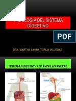 Fisiología Proceso Digestivo