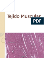 Tejido Muscular (Imagenes Histologicas)