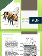 Clase 4 Entomologia-1480902472
