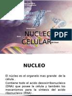 nucleo.pptx