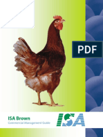 ISA Brown Commercial Stock North American Version