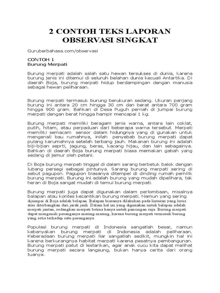 2 Contoh Teks Laporan Observasi Singkat Docx