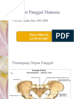 Anatomi Panggul Manusia