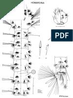 Aedes allotecnon.pdf