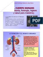 T7-Excrecion.pdf