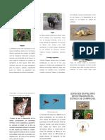 Especies de Fauna Amenazada y