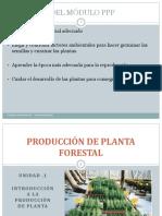 introduccion a la producción de planta forestal