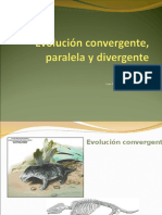 Ppt 4 Evolucion Convergente y Divergente
