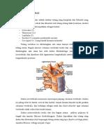 236111853-Anatomi-Vertebra.doc