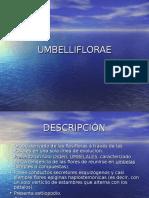 11_Umbelliflorae