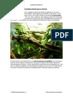 Guia de Plantas Gecko Crestado