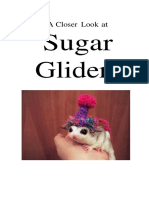 sugar glider booklet 1