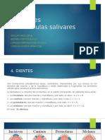 4.-DIENTES