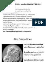 protozoarios