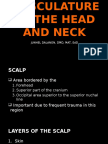 musculature of the head and neck