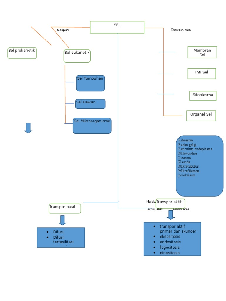 Peta konsep sel ccuart Choice Image