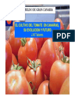 Tomate en Invernadero Canarias
