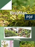 auladebrifitaspteridfitasgimnospermaseangiospermas (2).ppt