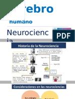 Anatomia Cerebro Humano FID