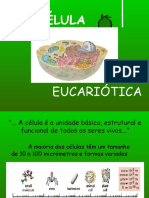 celula eucariotica