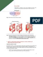 Biomedcode SA-White_Paper_TNF-DARE Dual Disease Model