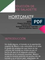 Producción de Tomate Saladette