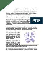 La actina.pdf