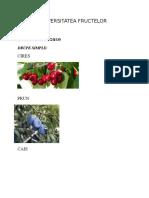 Diversitatea Fructelor - Nicolae Daniel