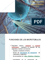 24. Citoesqueleto Microtubulos 1