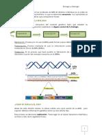 Apuntes Genc3a9tica Molecular 2011