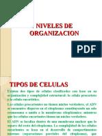 CLASE   TIPOS DE CELULAS.ppt