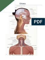 Anatomia Palpacyjna Miesni