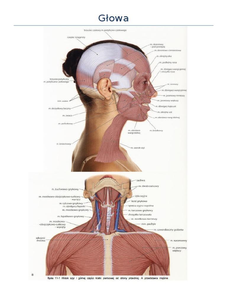 badanie palpacyjne układów mięśniowego i kostnego pdf chomikuj