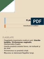 Curs 2-Flagelate Cavitare