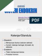 12. Anat Endokrin