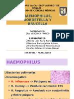 Haemophilus, Bordetella y Brucella
