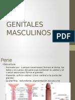 Maculino y Tacto Rectal