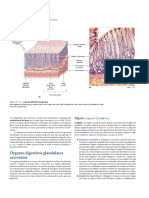 Glandulas Anexas. Higado y Pancreas. Martini Et Al. 2009. Anatomia Humana