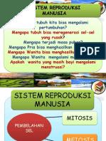PPT IX Sistem Reproduksi Manusia