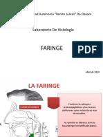 La Faringe