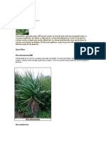 Aloe SPECII.doc.docx