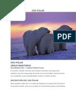La Vida- Oso Polar