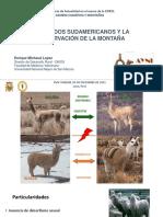 camelidos_montanas_y_cambio_climatico.pdf